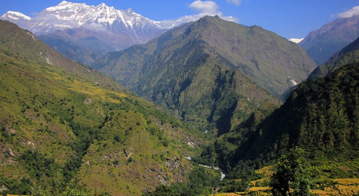 Green and yellow combination landscapes with towering mountains en route to Dhaulagiri round trek