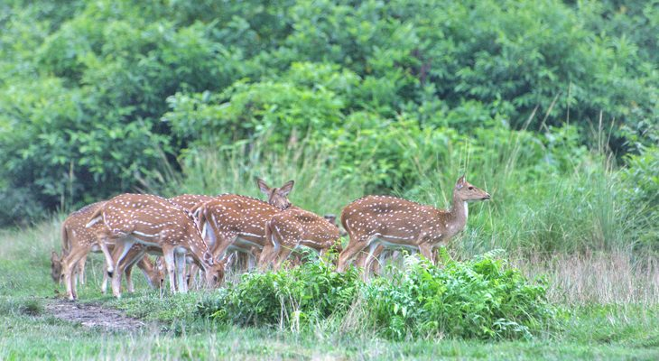 Encountering deer in Chitwan national park on the explore Nepal tour