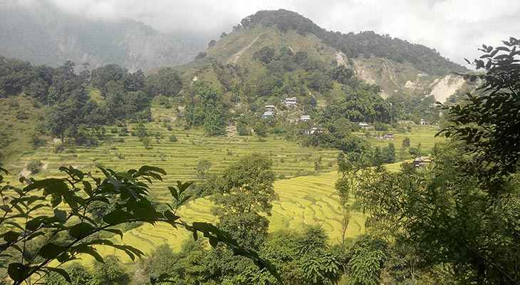Poon hill ghandruk trek passes farmland of rice terrace in subtropical climate zone